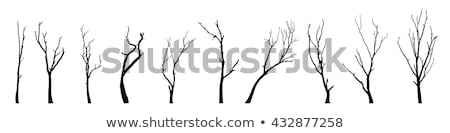 tree branches silhouette stock photo © sirylok