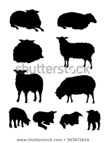 Sheeps Silhouettes Set Stock photo © Kaludov