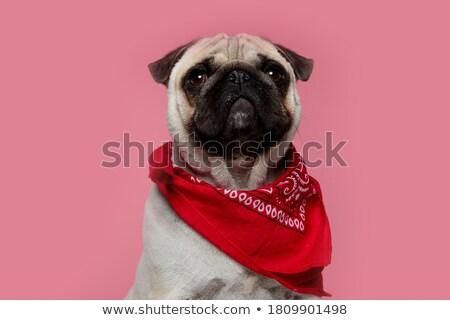 сидящий · вид · сбоку · Cute · щенков · собака - Сток-фото © feedough