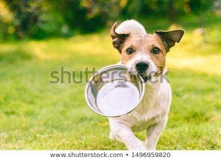 Stock fotó: Aranyos · kutyaeledel · vektor · rajz · kutya · fut