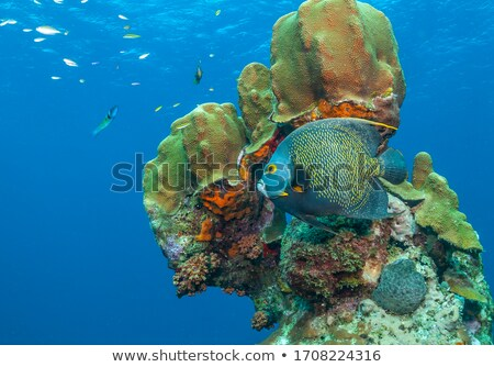 Island with coral reefs Stock photo © TanArt