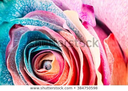 giallo · rosa · fiore · stelo · illustrato - foto d'archivio © Luppload