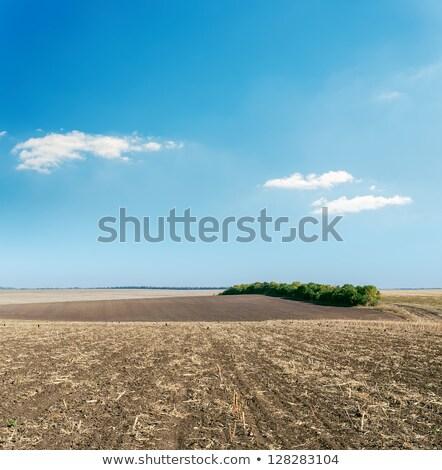 Pulluk kahverengi kil alan mavi gökyüzü ufuk Stok fotoğraf © lunamarina