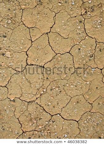 Asciugare terra struttura calore fiore sfondo Foto d'archivio © meinzahn