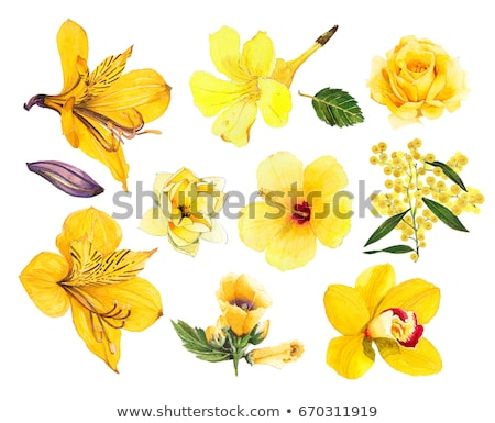 Flowers of yellow orchid Stock photo © boroda
