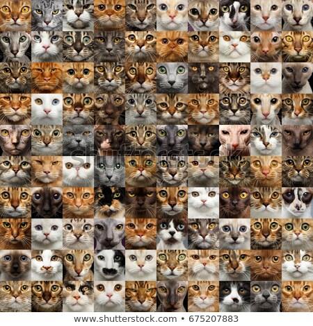 猫 · シルエット · セット · 白 · グループ · シルエット - ストックフォト © ntnt