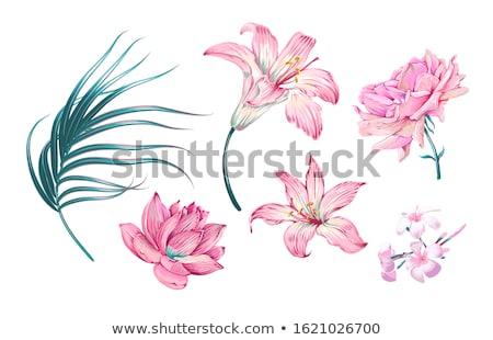 Zambak çiçek yaz bahçe fincan yeşil Stok fotoğraf © EFischen