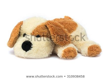 мягкой плюш маленькая комнатная собачка глядя Cute прямой Сток-фото © jordanrusev