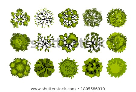 A topview of a plant Stock photo © bluering