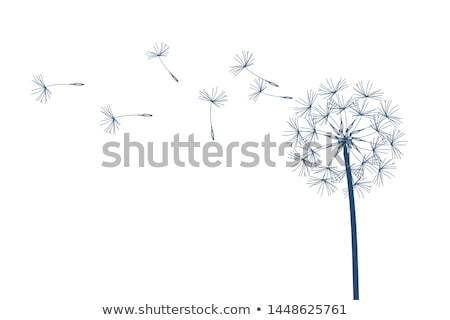 blow dandelion vector stock photo © greeek