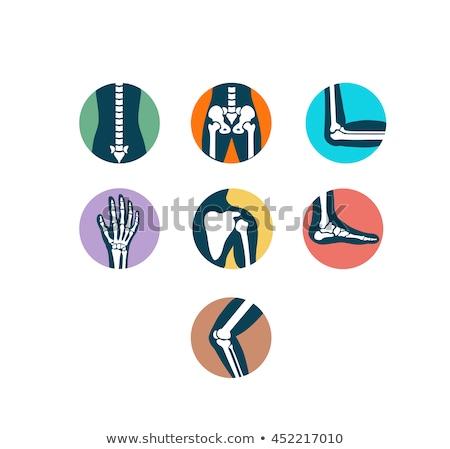 Joint anatomy symbol set. Colorful illustrations Stock photo © Tefi