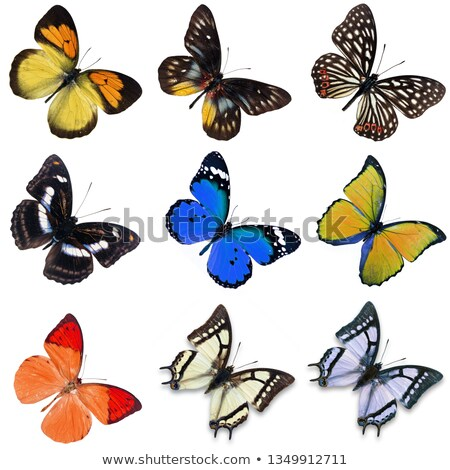 Different types of insects in green color Stock photo © bluering