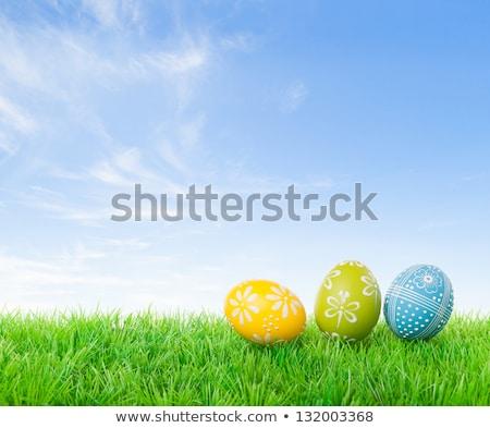 assinar · verde · campo · blue · sky · primavera · grama - foto stock © wavebreak_media