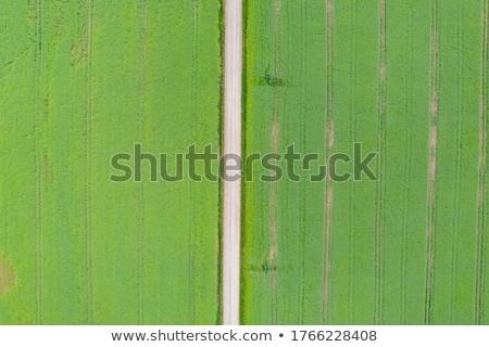 Punto view coltivato campo di grano agricola piantagione Foto d'archivio © stevanovicigor