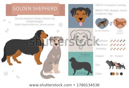 Zestaw głowie psa projektu Zdjęcia stock © orensila