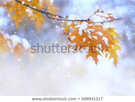 Primero nieve hojas de otoño ciudad parque árbol Foto stock © Juhku