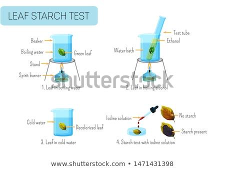Tudomány kísérlet levél illusztráció víz háttér Stock fotó © bluering