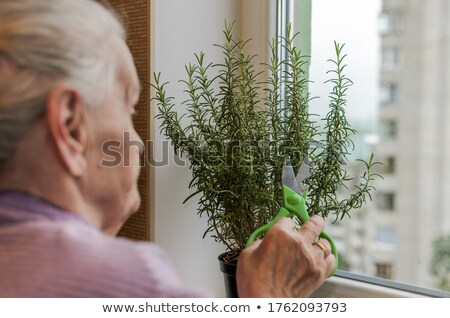 Woman with clippers standing by window Stock photo © IS2