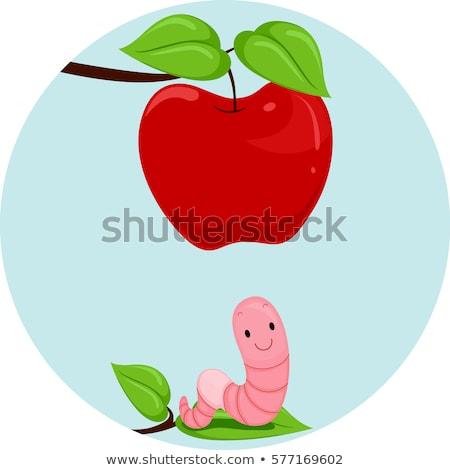 Jabłko robaka poniżej ilustracja dżdżownica znaczenie Zdjęcia stock © lenm