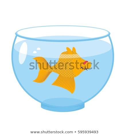 Dead gold fish in aquarium. Sea animal deceased. Corpse of goldf Stock photo © popaukropa
