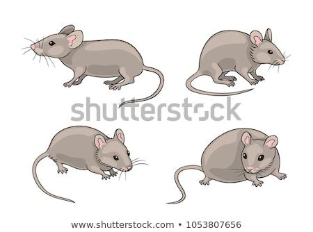 Sinsi karikatür fare örnek grafik Stok fotoğraf © cthoman