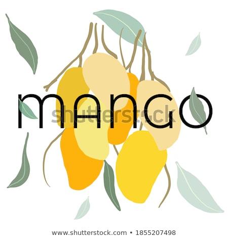 mangó · illustrator · gyümölcs - stock fotó © robuart