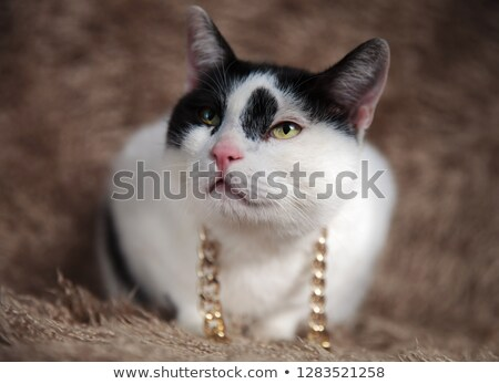 curious metis cat wearing gold chain looks up to side Stock photo © feedough