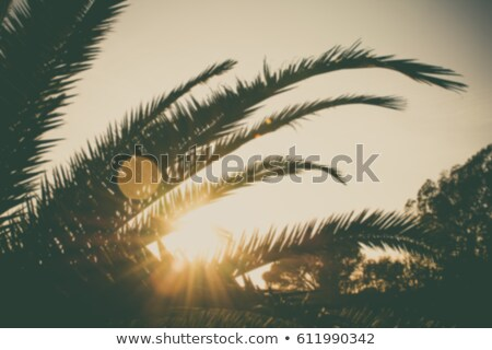 Palm branches or palm leaves at sunset. Vintage retro artistic blurry edit background with rendered  Stock photo © galitskaya