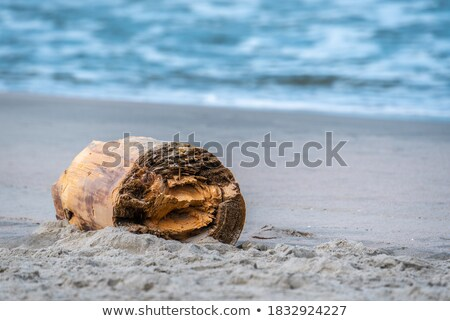 image of an old log at the white sand beach stock photo © galitskaya