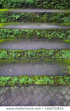 old stone stairs with moss and grass at sunny morning stock photo © boggy