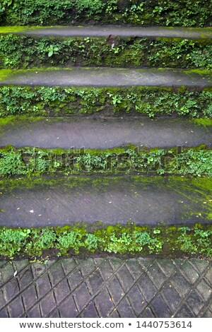 Eski taş merdiven yosun çim güneşli Stok fotoğraf © boggy