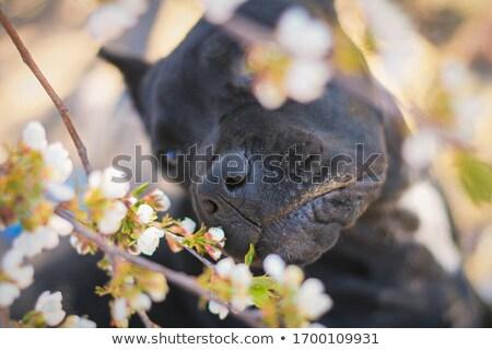 4 子犬 木製 家族 ストックフォト © craig