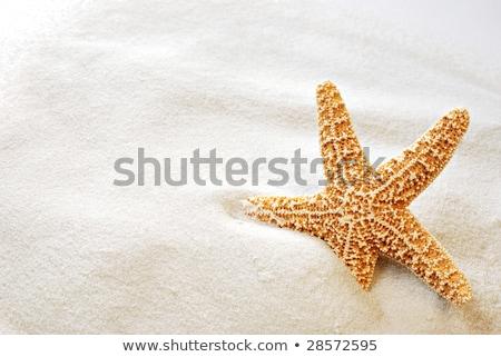 Beautiful tropical fish on the white sand beach Stock photo © galitskaya