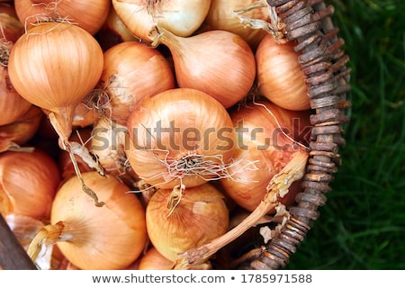 fresh onions harvest in wooden basket on grass stock photo © illia