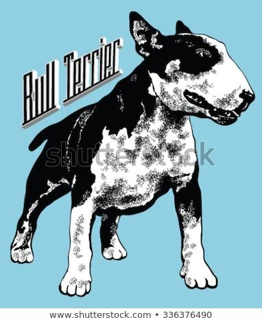 Bull Terrier Dog Breed Cartoon Retro Drawing Stock photo © patrimonio