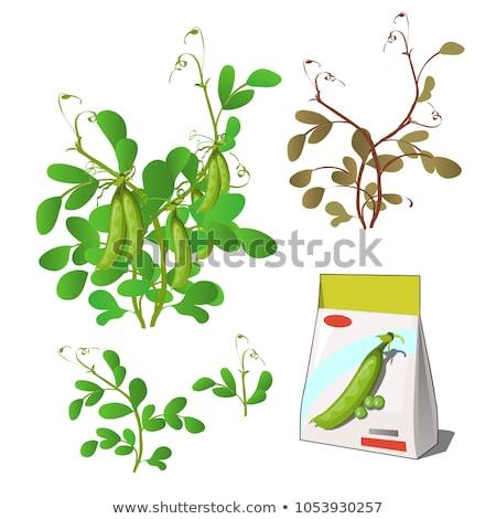 Zestaw życia rolniczy roślin zielone odizolowany Zdjęcia stock © Lady-Luck
