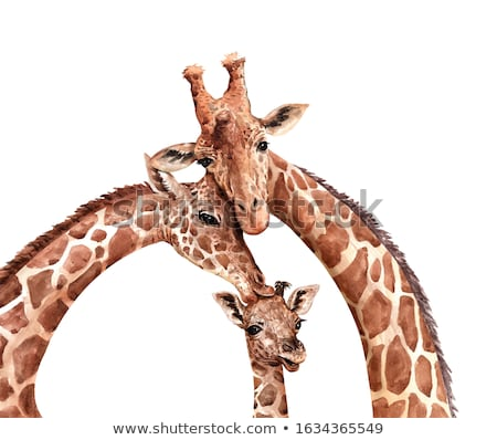 Giraffe liefde illustratie hart landschap paar Stockfoto © adrenalina
