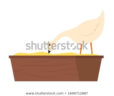 Countryside Bird Eating Grain, Goose Animal Vector Stock photo © robuart