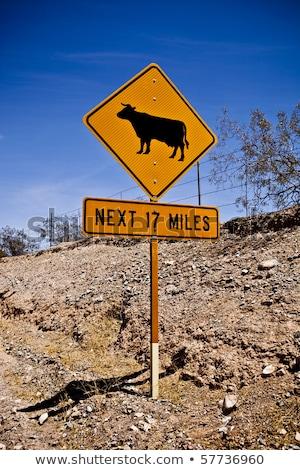 Brilhante amarelo vaca assinar estrada rural Foto stock © marcelozippo