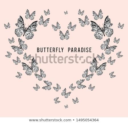 Сток-фото: бабочка · любителей · два · бабочки · красочный · цветы