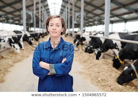 農家 安定した 食品 牛 肖像 フォーク ストックフォト © photography33