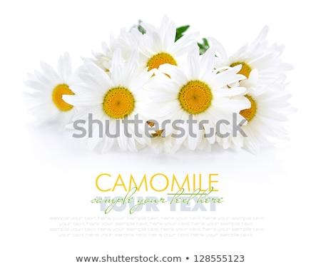 witte · groen · gras · bloem · gras · natuur · zomer - stockfoto © boroda