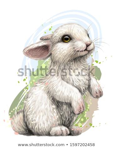 Wielkanoc królik szczęśliwy streszczenie jaj tle Zdjęcia stock © dagadu