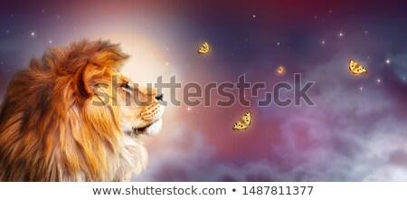 Sabana luz de la luna cebra juego unidad ilustración Foto stock © ajlber