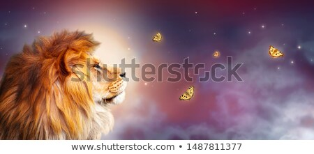 Savanna moonlight Stock photo © ajlber