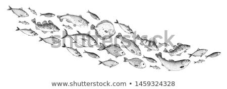 Peixe conjunto golfinhos tubarão fundo oceano Foto stock © meshaq2000