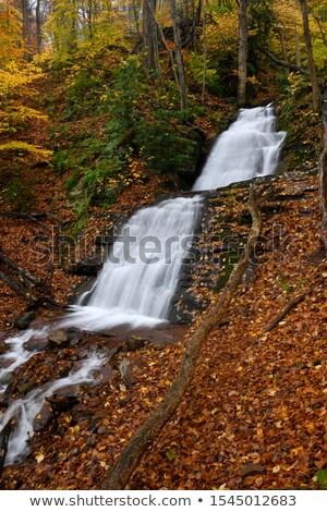 Delaware su boşluk orman doğa manzara Stok fotoğraf © jaymudaliar