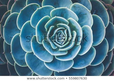 abstract · succulente · impianti · naturale · full · frame · dettaglio - foto d'archivio © itobi