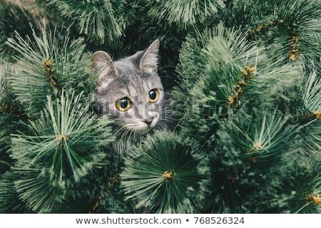 Cat Exploring Christmas Tree  Stock photo © tab62
