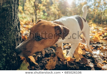 Dog sniffing at tree Stock photo © ivonnewierink